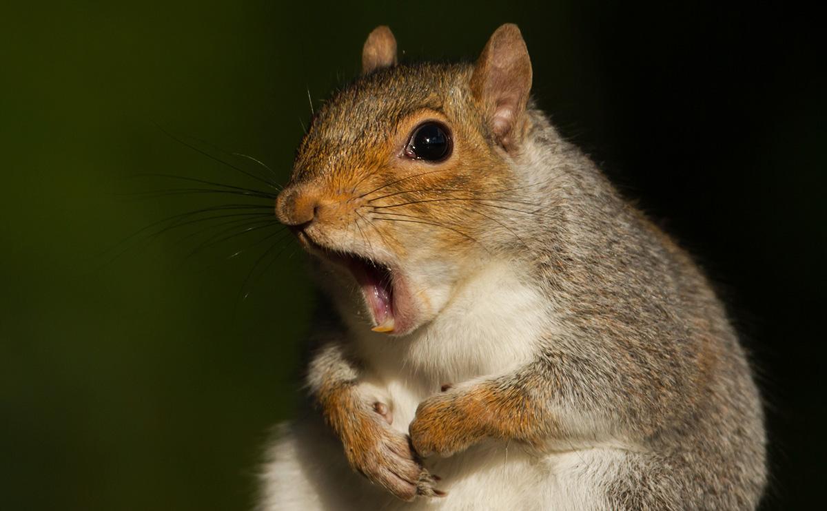 Name:  squirrel.jpg Views: 164 Size:  242.8 KB