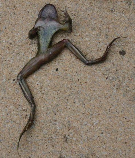 Name:  254cb6a11e0eb5bc1969974754fd6440--odd-world-frogs.jpg Views: 200 Size:  58.8 KB