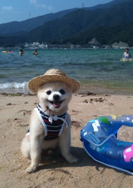 Name:  shunsukebeach.jpg
