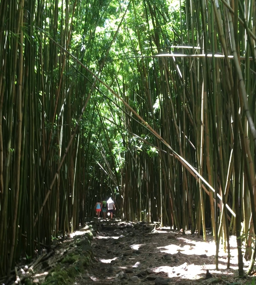 Name:  bamboo.jpg