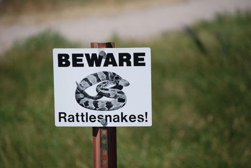 Name:  Rattlesnakes.jpg Views: 394 Size:  23.8 KB