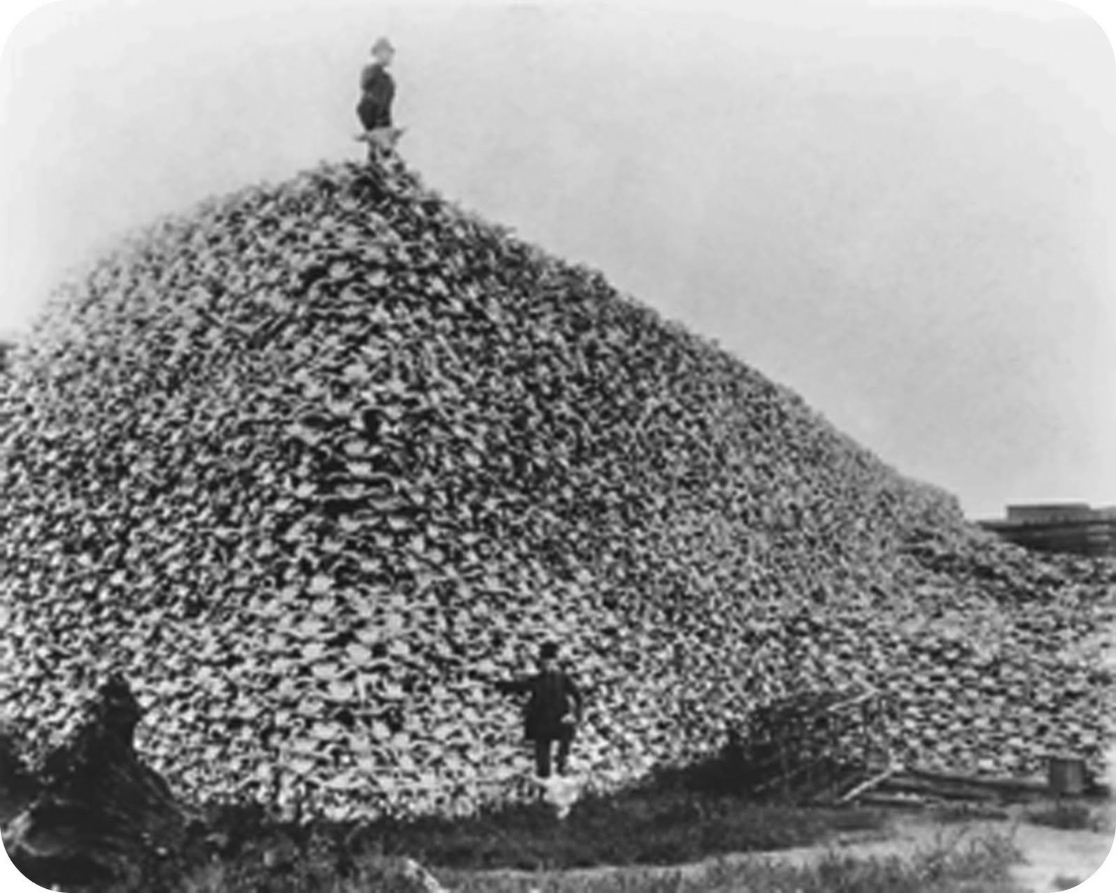 Name:  Bison_skull_pile.jpg