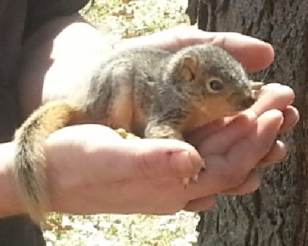 Name:  squirrel_in_house.PNG