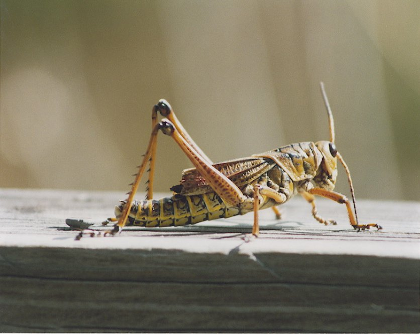 Name:  cricket.jpg Views: 155 Size:  69.3 KB