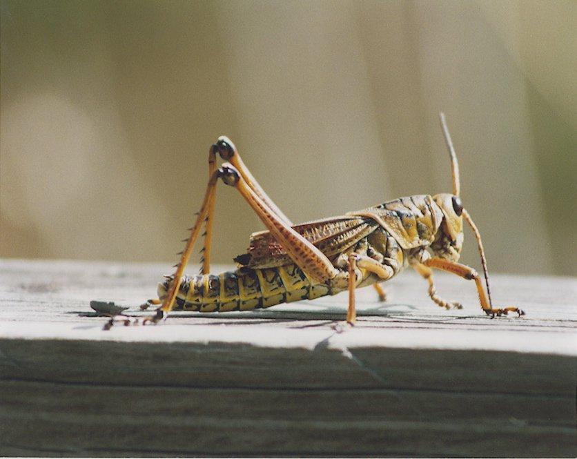 Name:  cricket.jpg Views: 156 Size:  69.3 KB